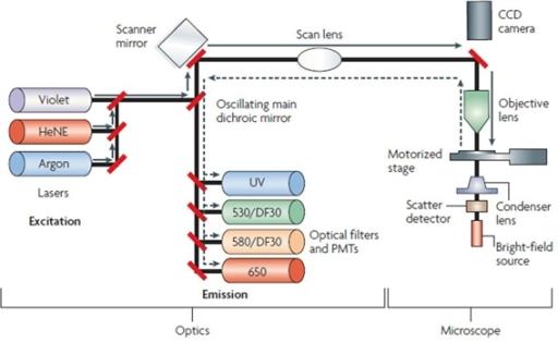 laser scanning cytometer schematic diagram the laser s. Black Bedroom Furniture Sets. Home Design Ideas