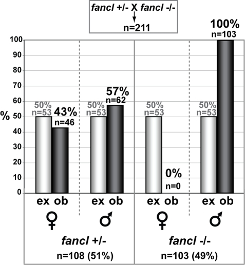 The absence of females in fancl homozygous mutants is due to sex reversal.The bar graph represents percentages of expected (ex, grey bars) and observed (ob, black bars) females and males among 211 progeny from a cross of fancl heterozygous females (fancl+/−) to fancl homozygous mutant males (fancl−/−). Total numbers (n) and percentages (%) of animals in each category are indicated on the graph. The expected ratio of female heterozygotes to male heterozygotes to female homozygous mutants to male homozygous mutants is 1∶1∶1∶1, but we observed a ratio of about 1∶1∶0∶2 (46 fancl+/− females: 62 fancl+/− males: 0 fancl−/− females: 103 fancl−/− males). This result rules out the hypothesis that homozygous mutant females die, but is predicted by the hypothesis that homozygous mutants that otherwise would have become females develop instead as males.