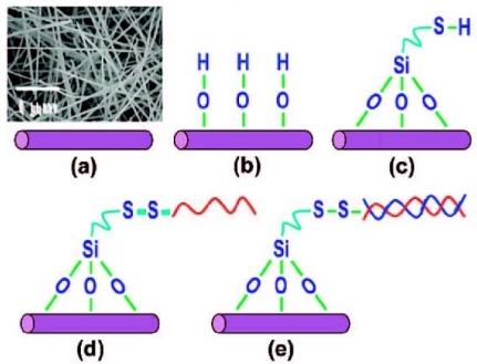 schematic diagram of a dna sensor based on gan nanowire open i schematic diagram of a dna sensor based on gan nanowires a nanowires