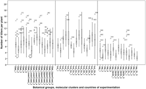 Box plots of number of tillers per plant of 26 varieties in five experimental sites: 1: Ghana; 2: Sierra Leone; 3: Guinea Bissau; 4: Togo and 5: Guinea. See materials and methods section for coding of the botanical and molecular clusters.