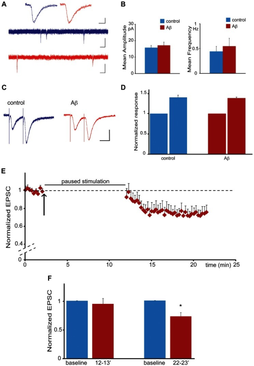 Aβ induced synaptic depression is dependent on synaptic stimulation.(A) Miniature EPSCs Upper traces: average of miniature events after perfusion of control (blue) or Aβ (red). Scale bars: horizontal, 5 ms; vertical 5 pA. Middle and lower traces: sample of a four seconds recording of miniature EPSC activity following perfusion of control (blue) or Aβ oligomers (red). Scale bars: horizontal 0.2 s; vertical 10 pA. (B) Perfusion of Aβ oligomers (red) does not change the amplitude (left) or the frequency (right) of recorded miniature events when compared to vehicle control (blue) (n = 20 for each condition). (C) EPSC recordings obtained by applying a paired pulse facilitation protocol under control conditions (blue trace) and after Aβ oligomers perfusion (red trace). Inter pulse interval was 30 ms. Scale bars: horizontal, 20 ms; vertical 20 pA. (D) Quantification of the experiment shown in C. Perfusion of Aβ oligomers (red) does not affect paired-pulse facilitation when compared to control (blue). The response to the second pulse was normalized by the response to the first pulse (n = 10 for each condition). (E) Aβ induced synaptic depression is dependent on synaptic stimulation. Normalized EPSCs from CA1 neurons are shown. After baseline recordings, Aβ oligomers were added to the bath solution (black arrow) and the stimulation protocol paused for 10 minutes (represented by the black bar) before being resumed for another 10 min. (F) Quantification of the experiment shown in E. Bars indicate responses recorded during baseline (blue) and in presence of Aβ (red) at different time intervals: minute 12–13 averages responses recorded immediately after stimulation was resumed; minute 22–23 averages responses 10 minutes after stimulation was resumed (i.e. 19–20 minutes after the start of Aβ perfusion) (*p<0.05, n = 8).