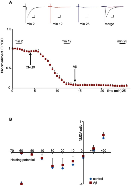 Aβ has no effect on NMDA-receptor mediated ion conductance.(A) Normalized EPSC amplitudes plotted against time in presence of CNQX and Aβ. Neurons were patched and held at −60 mV and responses were evoked throughout the duration of the experiments. Following baseline recording, CNQX was applied to the bath to block AMPA-receptor dependent currents (arrow on the left). Following the sharp decrease in the EPSC amplitude, Aβ oligomers were applied (arrow on the right). Averaged traces taken during baseline recording (min 2), after CNQX application (min 12) and after Aβ application (min 25) are shown above the graph. There is no evident difference between currents recorded immediately before Aβ application and currents recorded 10 minutes following Aβ application (n = 6). Color legend: black: currents recorded before CNQX application; red: currents recorded before Aβ application; blue: currents recorded after Aβ application. Scale bars: horizontal 0.1 s; vertical 10 pA. (B) Normalized NMDA-receptor I/V curve recorded in presence or absence of Aβ oligomers. Evoked synaptic responses of CA1 pyramidal neurons were recorded at −60 mV. Next, CNQX was bath applied to block AMPA-receptor currents. Following AMPA-receptor blockade, either vehicle or Aβ was bath applied. 15 min after Aβ application, evoked EPSCs (now dependent on NMDA-receptor responses) were recorded at different holding potentials (steps of 10 mV increments from −60 to +20 mV holding potential). Calculating the ratio of NMDA-receptor responses vs. the initial AMPA-receptor response was used to normalize the NMDA-receptor currents from different experiments. No noticeable difference in NMDA-receptor responses was found between neurons treated with vehicle vs. Aβ oligomers (n = 5 per group).
