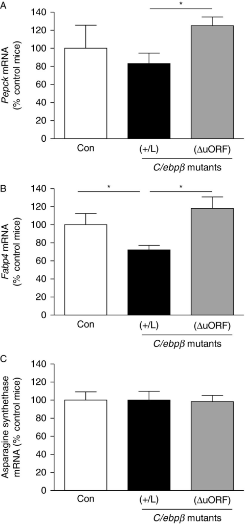 Elevated C/EBPβ-LIP represses expression of PEPCK and FABP4, but not asparagine synthetase in adipose tissue in vivo. Real-time PCR measurement of levels of mRNA encoding (A) PEPCK, (B) FABP4 and (C) asparagine synthetase in adipose tissue of wild-type control mice (Con, white bars), C/EBPβ(+/L) (+/L, black bars) and C/EBPβΔuORF (ΔuORF, grey bars). C/EBPβ(+/L) mice are heterozygous for an allele of C/EBPβ in which the normal gene has been replaced by C/EBPβ-LIP (a 'knock-in'; Smink et al. 2009) and C/EBPβΔuORF mice have a homozygous disruption of the upstream ORF (Wethmar et al. 2010). Adipose tissue mRNA levels, normalised to TBP, are expressed relative to levels in control mice (arbitrarily set to 100%) and are mean±s.e.m.; n=6–9/group. *P≤0.05.