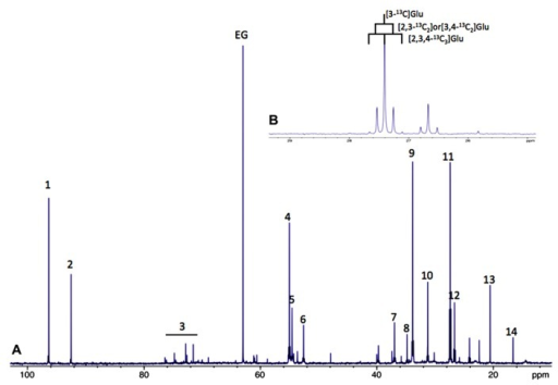 (A) Typical 13C-NMR spectrum of rat brain perchloric extract, after perfusion with [1-13C]glucose. (1) Glucose C1α, (2) glucose C1β, 3: glucose C2, C3, C4, C5 and C6, 4: Glu C2, 5:Gln C2, 6: Asp C2, 7: Asp C3, 8: GABA C2, 9: Glu C4, 10: Gln C4, 11: Glu C3, 12: Gln C3, 13: lactate C3 and 14: Ala C3. (B)13C-13C coupling figures allow to distinguish between different isotopomers (example on glutamate C3).