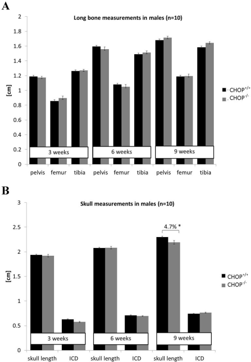 Bone measurements in mice lacking CHOP.A) Long bone measurements (cm) of wild type and CHOP  mice at 3, 6 and 9 weeks of age confirming that deletion of CHOP had no effect on the long bone formation (n = 10). B) Head measurements (cm) in wild type and CHOP  mice demonstrating shorter skulls in CHOP  mice at 9 weeks of age (n = 10; One Way ANOVA). Key: ICD = inner canthal distance; CHOP+/+ = wild type, CHOP−/− = knock-out. Error bars show standard error of the mean (SEM); * P<0.05.