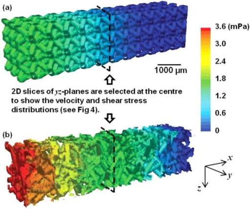 3D volume images showing the overall pressure changes in the regular and the randomized structures (inflow velocity: 0.02 mm/s). [Color figure can be viewed in the online issue, which is available at http://wileyonlinelibrary.com.]