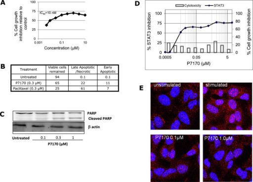 P7170 induced apoptosis and decreased STAT3 activity in NSCLC cells. (A) Cell growth inhibition of exponentially growing H460 NSCLC cells by P7170. (B) Annexin V and propidium iodide positive cells analyzed by flow cytometry after 16 h of treatment. (C) H460 cells were seeded in 90 mm Petri dishes (1 × 106 cells/ plate). The cells were serum starved for 16 h. Fresh medium was added to the plates and treated with P7170 (0.1, 0.3, and1 μM) for 24 h; total cellular proteins were processed for western blotting for cleaved PARP; (D) Inhibition of STAT3 activity performed using Panomics STAT3 luciferase kit, corresponding cell toxicity at same concentrations of P7170 was determined by PI-based assay (plotted on the secondary axis on right side of the panel). (E) Immunofluorescence staining for STAT3 phosphorylation in A549 NSCLC cells: pSTAT3 (red) and nucleus (blue). See Methods for details.