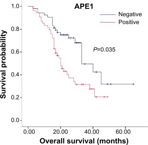 Kaplan–Meier analysis of the relationship between APE1 immunostaining and survival time.Notes: Survival time after surgery in APE1-positive and APE1-negative gastric cancer patients. The median survival time was 29.0 months (P<0.05). APE1 expression is upregulated in gastric cancer and is a marker of poor prognosis in patients with gastric cancer.