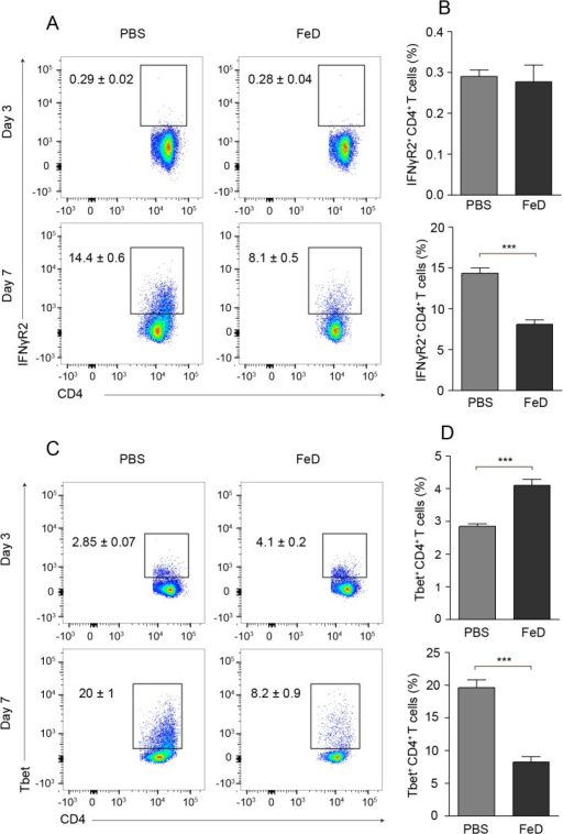 Iron Dextran Mitigates the Upregulation of IFNγR2 and T-bet on CD4+ T Cells in the Spleen.Representative flow cytometric dot plots for IFNγR2+ CD4+ T cells (a) and the percentage of IFNγR2+ cells (b) after gating on CD4+ T cells on day 3 and day 7 post-infection. Representative flow cytometric dot plots for T-bet+ CD4+ T cells (c) and the percentage of T-bet+ cells (d) after gating on CD4+ T cells on day 3 and 7 post-infection. The numbers shown on the dot plots indicate the mean percentage of cells inside the gate ± S.E.M. On day 3 post-infection, n = 6 for control mice and n = 5 for FeD mice. On day 7 post-infection, n = 6 for control mice and n = 6 for FeD mice. FeD = iron dextran, PBS = control. Statistically significant differences, shown by asterisks (*** P < 0.001), were determined by unpaired Student's t-test.