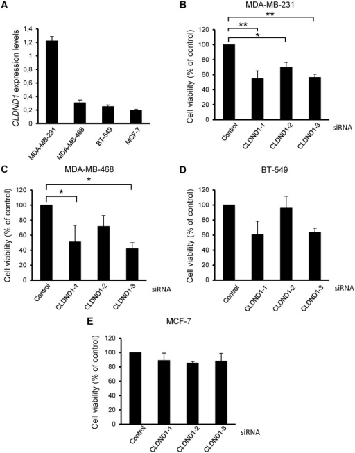 CLDND1 depletion decreases viability of different breast cancer cell lines.(A) mRNA expression of CLDND1 in various breast cancer cell lines. MDA-MB-231, MDA-MB-468, BT-549 and MCF-7 cells were incubated under normal conditions for 24 h. Cells were subsequently harvested and were analyzed for mRNA expression of CLDND1 with real-time quantitative PCR. In B-E, MDA-MB-231, MDA-MB-468, BT-549 and MCF-7 cells respectively, were transfected with three different siRNA oligonucleotides targeting CLDND1 or with a control siRNA for 72 h. Cells were thereafter subjected to WST-1 assay. Data (mean ± S.E.M., n = 3) represent the amount of viable cells expressed as percent viable cells obtained under control conditions (B-E). Asterisks indicate statistically significant differences (*, p<0.05; **, p<0.01) compared with control cells.