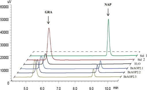 Enzymatic activity of BrAOP2 heterologously expressed in E. coli. HPLC results (monitored at 229nm) of purified desulfoglucosinolates from bacterial extracts containing heterologously expressed BrAOP2 fusion proteins is shown. The compound identities were confirmed by comparing retention times and UV light absorption profiles with those of authentic standards. Std 2 indicates desulfated GRA standard, Std 1 indicates desulfated NAP standard, BrAOP2.1, BrAOP2.2, and BrAOP2.3 indicate GRA treated with these three BrAOP2 enzymes, and H2O shows GRA treated with ddH2O as the negative control.