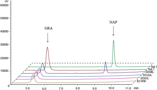 Enzymatic activity of heterologously expressed site-directed mutant BrAOP2.1 proteins. The purified mutant proteins were assayed with GRA and the products were extracted and analysed by HPLC as described in Materials and methods. Site-directed mutagenesis of BrAOP2.1 was conducted four times to test the four active-site residues. (This figure is available in colour at JXB online.)