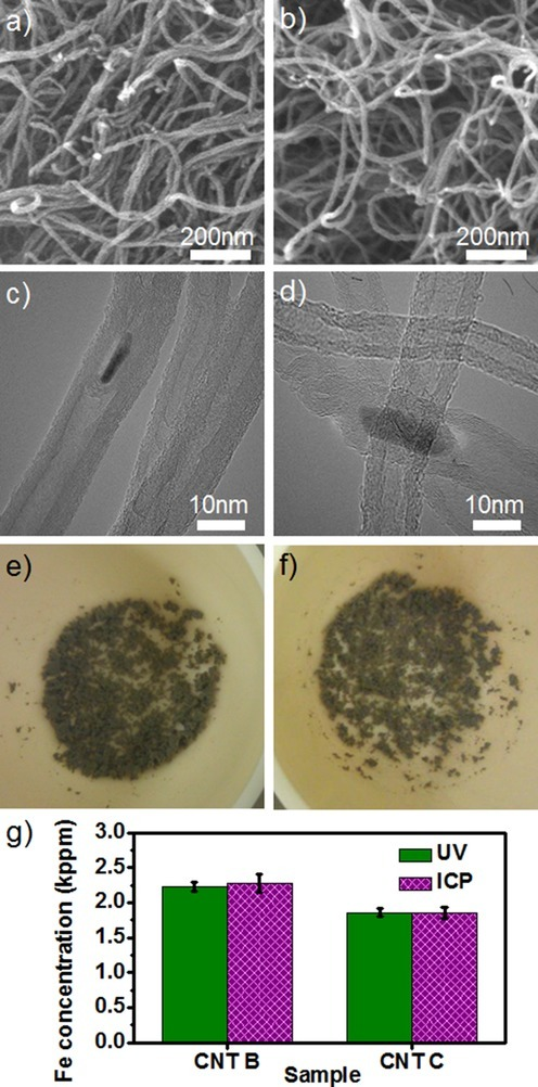 SEM images of a) CNT-B and b) CNT-C. TEM images of c) CNT-B and d) CNT-C show that multiple graphitic layers encase catalyst particles. The ashes, produced by oxidizing CNTs at 900 °C, have a grey color for both e) CNT-B and f) CNT-C. g) Fe concentrations measured by UV/Vis spectroscopy and ICP-OES for CNT-B and CNT-C. Data are the average ±SD of three independent measurements.