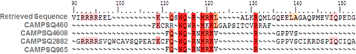 Pattern-restricted multiple sequence alignment of the sequence retrieved using pattern of lactotransferrin with the experimentally validated sequences of lactotransferrin.