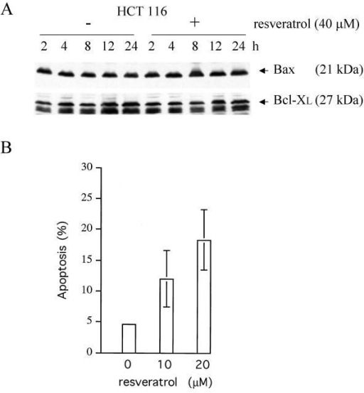 Expression of Bax and Bcl-XL, and apoptosis in human HCT116 colon carcinoma cells treated with low doses of resveratrol. Panel A: Total protein extracts (15 μg) of HCT116 cultures treated with 40 μM resveratrol or only DMSO (the solvent) were prepared at different times and analyzed by immunoblotting, employing the anti-Bax N20 (1:500) and anti-Bcl-XL antibodies (1:200). Note that at this low drug concentration, neither the level of Bax nor of Bcl-XL changed significantly. Panel B: FACS analyses on exponentially growing HCT116 cultures either mock-treated or treated with low doses of resveratrol for 48 h exhibited significant apoptosis in the drug-treated cultures. Error bars depict standard deviations of the means of five experiments.