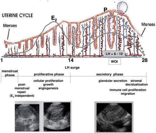 steroid profiles trenbolone