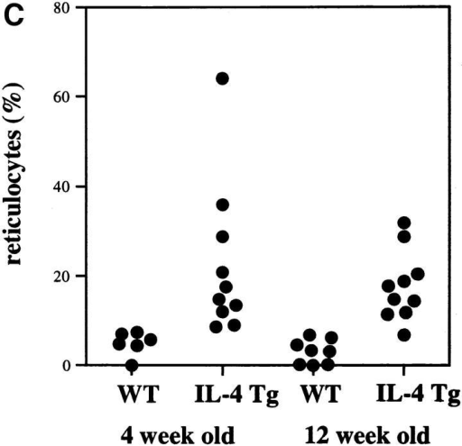 Anemia in the IL-4 tg mice. (A) Survival rate of IL-4 tg  mice. IL-4 tg (n = 31) and littermate control mice (n = 20) were monitored daily for 12 wk  and the death of mice recorded. Shown is the survival rate of the mice in percentage. (B and C) Hematocrit counts and percentage of reticulocyte numbers in the blood of 4- and 12-wk-old IL-4 tg  and control mice.