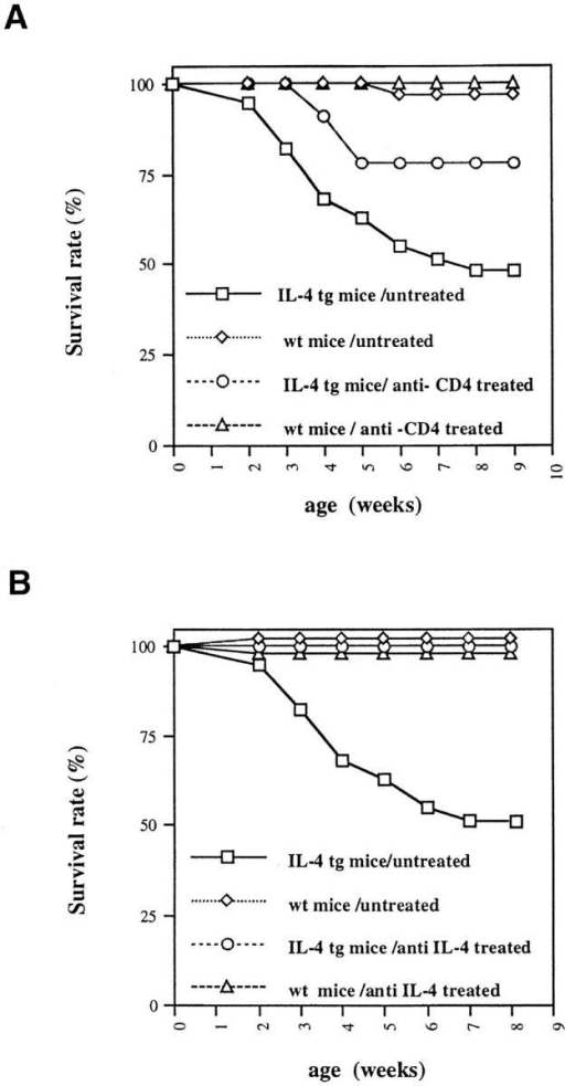 Survival rate of IL-4 tg mice after in vivo anti-CD4 (A) and  anti-IL-4 neutralizing antibody (B) treatment. At 1 wk of age IL-4 tg and  littermate control mice were injected with anti-CD4 antibodies (tg: n =  11; wt: n = 8) for 8 wk and anti-IL-4 neutralizing antibodies (11B11) for  7 wk (tg: n = 7; wt: n = 9). During this time the numbers of dead mice  were recorded. Shown are the survival rates of treated versus untreated  control and IL-4 tg mice.