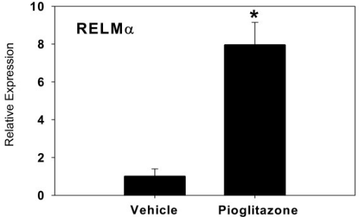 Relative increase in expression of RELMα by Real Time RT-PCR. Bars represent mean ± SD, in relative gene expression calculated relative to endogenous GAPDH expression. An RNA concentration-response validation curve was carried out to determine the concentration of RNA to add to the RT-PCR reaction. All samples were run in duplicate, n = 3 animals per group.