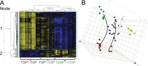 Transcriptional profiles of patient derived V. cholerae with and without phage incubated in a pond microcosm.A. Shown is a heat map of the subset of transcripts that are differentially regulated (ANOVA P<1×10−7; 182 genes) in at least one of the following six conditions: V. cholerae from phage positive patients (T0P*, T5P*, T24P*) or phage negative patients (T0P, T5P, or T24P) incubated for 0, 5, or 24 h. Yellow and blue represent induced (max = 46-fold) and repressed (max = 16-fold) genes, respectively. The sample labels at the bottom are color-coded to match the right panel; one T5P sample clustered with T5P* (as shown) and one T5P clustered with the T24 samples (not individually labeled). The thin vertical dotted line breaks the genes into two major groups (nodes) provided in the supplement as Node 1 (upper group; Table S8) and Node 2 (lower group; Table S9). B. Principal Component Analysis (PCA) of the 182 gene expression values in 'A'. The arrows indicate the 'transcriptional movement' from 0 to 5 to 24 h. Biological Replicates = 2. Yellow cubes are the T24I in vitro derived samples depicted in Fig. 6B as a reference.