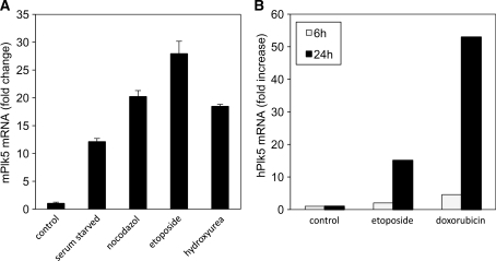 Plk5 expression is induced following different stress stimuli. (A) Murine NIH 3T3 cells were either left untreated (control) or treated for 18 h with the DNA damaging agents etoposide (Etop) or HU, the spindle disassembly agent, nocodazole (Noc) or were serum starved (SS). (B) Human HEK293 cells were either left untreated (control) or treated with DNA damaging agent etoposide or doxorubicin for 6 or 24 h. The Plk5 mRNA level was measured by qPCR in both cases.