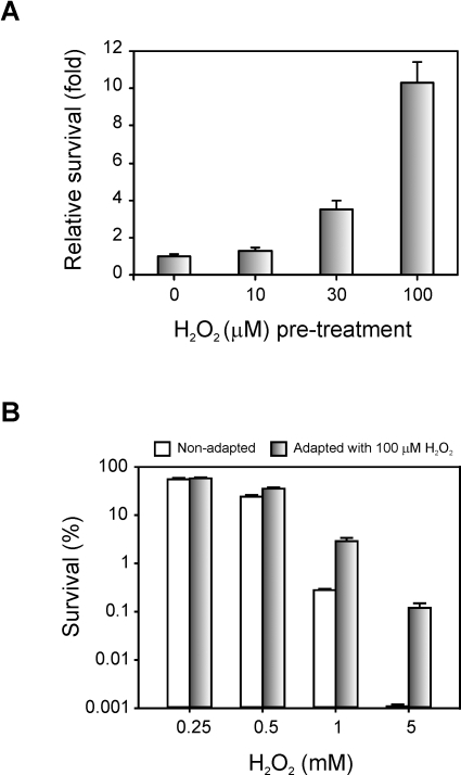 Adaptive response of Xac to hydrogen peroxide treatment.(A) Exponential phase cultures were adapted with the indicated concentrations of H2O2 for 60 min and then exposed to 1 mM H2O2 for 15 min. The number of CFU was determined for each culture before and after the treatment with 1 mM H2O2 by plating of appropriate dilutions. The related survival is defined as the percentage of survival of the pre-adapted culture divided by the percentage of survival of the untreated control. (B) Exponential phase cultures were pre-adapted with 100 µM H2O2 for 60 min. The number of CFU was determined for the preadapted cultures and for the unadapted controls and then H2O2 was added to the final concentrations indicated, followed by an incubation of 15 min. The percentage of survival was calculated as the number of CFU after treatment divided by the number of CFU prior to treatment ×100. Experiments were performed in triplicate; error bars indicate ±1 standard deviation of the mean.