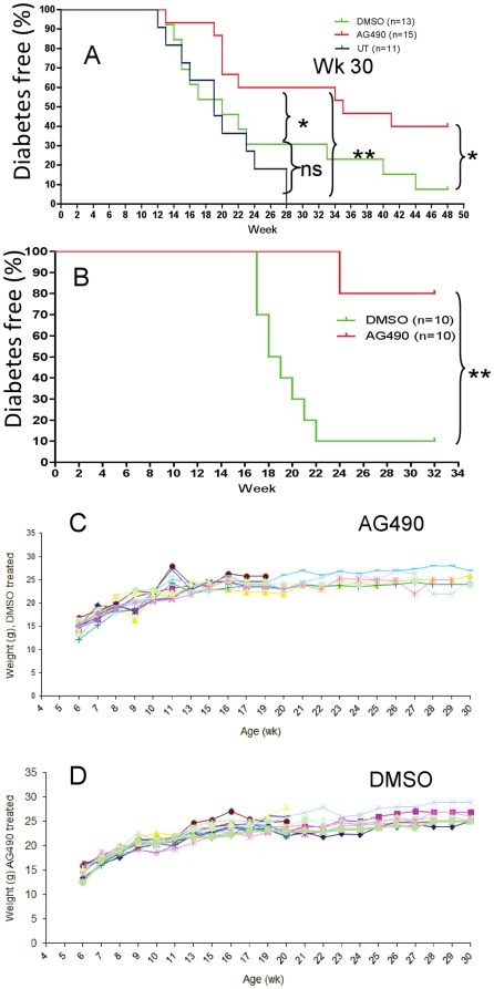 AG490 prevents development of autoimmune diabetes.Prediabetic female NOD mice at 4 (UT: n = 11; DMSO: n = 13; and AG490 treated mice: n = 15 mice/group) (A), or at 8 week of age, (n = 10 per group) (B) were treated with AG490 or DMSO (i.p) for 5 consecutive week, three time per week followed by once a week for 5 more week [Kaplan-Meier test (*p = 0.02, 1A) and (**p = 0.005, 1B, at week 30)]. Our data also indicate that significant differences (p<0.01) was observed between the AG490 and DMSO treated mice for up week 52; when treatment was started at week 4. Body weight of NOD mice treated with AG490 (C) or DMSO (D) in mice when treatment initiated from 4 weeks of age is shown. [This figure is intended to be in color online and black and white in print.]