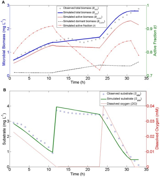 MEND model simulations against the experimental dataset used by Stolpovsky et al. (2011).(a) total live biomass, active and dormant biomass, and active fraction; (b) observed and simulated substrate concentration and prescribed O2 concentration. There are three manipulations on the substrate and oxygen: (1) at time 0, the substrate (3 mg/L) and O2 (0.025 mM) are added to the system; (2) after 12 h, the same amount of substrate is injected; (3) at 24 h, additional O2 (0.04 mM) is injected to the system. The observed concentrations of substrate and total biomass are hourly data interpolated from the original observations in Stolpovsky et al. (2011). We scaled the substrate concentrations (with units of mM in original data) to match the magnitude of biomass concentration in units of mg/L.