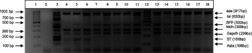 Agarose gel of the PCR products obtained from samples (lane 4–11, 13–18). No template control (NTC) in (lane 2). The molecular weight marker is shown in (lane 1 and 12). The positive reference control is shown in (lane3)