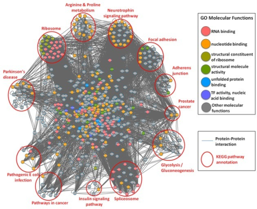 Protein–protein interaction network of all human S-nitrosylated proteins with the annotations of GO molecular function (marked in different colors) and KEGG metabolic pathways (clustered in different pathway groups).