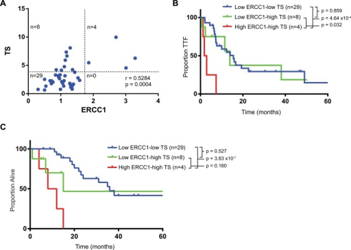 Combination of ERCC1 and TS.(A) Correlation between ERCC1 and TS expression. (B) Time to treatment failure of all patients per combination of ERCC1/TS. (B) Overall survival of all patients per combination of ERCC1/TS