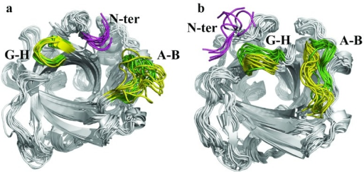 Structural analysis of MD sampled snapshots.Superposition of the snapshots taken every 10 ns from the MD trajectories sampled for the (a) open and (b) closed states of wild type NP7 and its Δ(1-3) variant. The backbone of the extra Leu-Pro-Gly stretch found in NP7 is shown in magenta, and the backbone of the A-B and G-H loops for wild type and Δ(1-3) NP7 is shown in green and yellow, respectively.