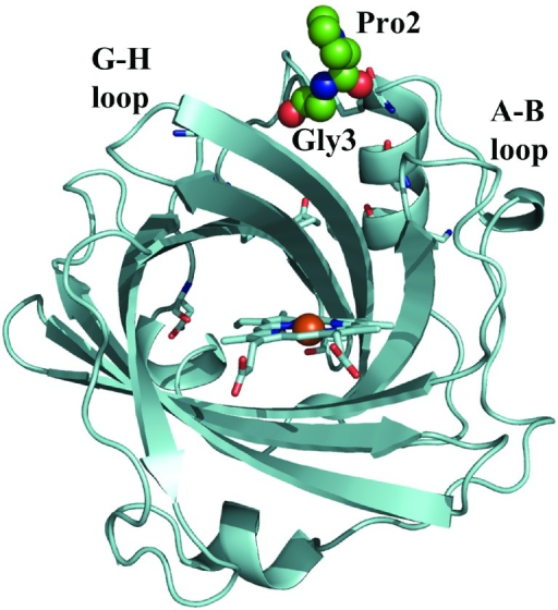 Representation of the backbone in the X-ray structure of NP7 solved at low pH (5.8).Residues Pro and Gly of the extra N-terminus stretch (Leu-Pro-Gly) found in NP7 are shown as green-coloured spheres. The spatial position of Leu, and the additional Met0 residue originating from the start codon of the expression system, were not seen in the X-ray crystal.
