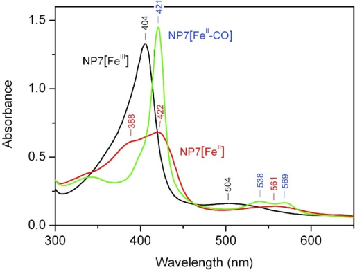 Absorption spectra of ferric and ferrous NP7 at pH 7.5.Black: NP7[FeIII];red: NP7[FeII];blue: NP7[FeII–CO].