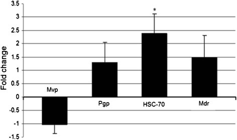 Average expression of stress-related gene encoding 70-kDa heat shock protein (HSC-70) and multi xenobiotic resistance-related transporters Mvp (major vault protein), Pgp (permeability glycoprotein) and Mdr (multidrug-resistance gene) in mussels collected from polluted region in comparison with mussels from the cultivating location. Statistically significant change (fold change > 2, p < 0.05) is marked with an asterisk (*).