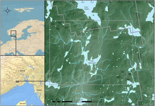 Map of study area.Location of the study plots in a boreal forest landscape in SE Norway. Plots labeled with K are located close to the small lake Kapteinstjern, and plots labeled with A are located SW of the lake Årumsvannet. Reprinted from Kartverket under a CC BY license, with permission from Kartverket, original copyright Kartverket 2013.