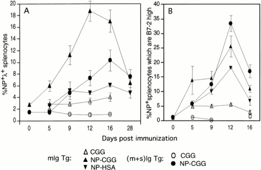 Time course analysis of primary response to NP immunization. mIg and (m+s)Ig Tg splenocytes were analyzed by FACS® at various time points after immunization with NP-HSA, NP-CGG, or CGG alone. (A) Mean percentages of NP-specific splenocytes; (B) the mean percentage of NP-specific splenocytes that are B7-2high. Error bars indicate SEM. Numbers of mice: d0, n = 4; d28, n = 3; d5–16, NP-HSA, n = 3; CGG mIg Tg, n = 4–5; NP-CGG mIg Tg, n = 5–6; CGG (m+s)Ig Tg, n = 3; NP-CGG (m+s)Ig Tg, n = 4–7. Data are combined from three experiments.