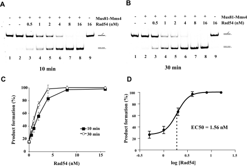 Rad54 concentration-dependent enhancement of Mus81·Mms4-mediated 3′ DNA flap cleavage. Reaction mixtures containing 3′ DNA flap (6 nm), Mus81·Mms4 (0.25 nm), and the indicated amount of Rad54 (0.5, 1, 2, 4, 8, or 16 nm) were incubated at 37 °C for 10 min (A) and 30 min (B) and then analyzed. C, quantification of the data in A and B with S.D. based on three independent experiments. D, plot of percent of product formation as a logarithm of Rad54 concentration with indicated median effective concentration (EC50).