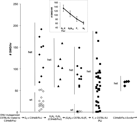 Effect of genetic background on incidence of SWD in heterozygous Scn8a8Jmice. Each point shows the number of SWD per hour for an individual mouse, in different genetic backgrounds. Heterozygous (het) genotypes are shown in filled symbols, wild-type (wt) in open symbols. The inset shows a plot of the average seizure frequency (±SE) in the four Scn8a8J genotypes. The average seizure frequency per hour (±SE) are: G3× C3HeB/FeJ: 132.1 ± 15.4 (het), 22.3 ± 4.3 (wt); G3N2 and G3N3: 104.6 ± 14.3 (het); (G3N3 X C57BL/6J)F1: 80.2 ± 12 (het), 0.8 ± .5 (wt); F1 X C57BL/6J: 60.6 ± 7.8 (het); C3HeB/FeJ–Scn8amed/+ 67.9 ± 2.5.