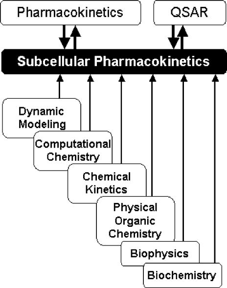 Structure-based subcellular pharmacokinetics and related sciences. Two-sided arrows indicate mutual influence; one-sided arrows indicate supportive roles.