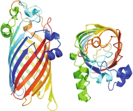 Crystal structure of a bacterial β-barrel outer membrane protein. Left: a ribbon representation of the structure of LpxR, a lipid A deacylase of Salmonella typhimurium [133]. The 12-stranded β-barrel consists of all anti-parallel β-strands, which are connected by short turns at the periplasmic side (bottom) and longer loops including some α-helical segments at the extracellular side (top). The ribbon is colored with a gradient from the N terminus in blue to the C terminus in red. Right a top view of the protein (the figure was kindly provided by Lucy Rutten)