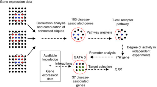 Flowchart of the modular analysis by Benson and colleagues [1]. Integration of several public gene expression datasets revealed a group of shared (blue) and closely connected clique (red and black) disease-associated genes. A subset of these genes were found to share the T-cell receptor signalling pathway, an observation that was then validated by independent experimentation. To identify a transcription factor (GATA3) regulating one of this subset, the ITK gene, a promoter analysis was performed. The final module of 37 disease-associated genes consisted of genes listed in public databases as having relevant expression patterns and interacting with GATA3.