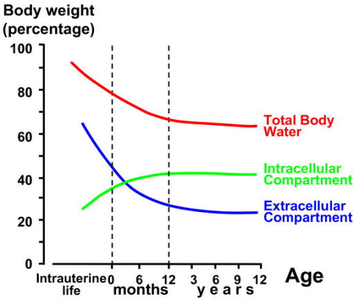 Winters Diagram With The Subdivision Of Total Body Wate