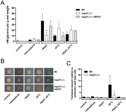 Hsp21 regulates intracellular glycerol, glycogen and trehalose homeostasis.(A) Measurement of intracellular glycerol levels in the wild type (Wt), the hsp21Δ/Δ mutant or the hsp21Δ/Δ::HSP21 complemented strain after growth for 24 h in SD medium (control) at 30°C, SD medium supplemented with 0.4 mM menadione (+menadione) at 30°C, SD medium supplemented with 1.5 M NaCl (+NaCl) at 30°C, SD medium at 42°C (42°C), or SD medium supplemented with 1.5 M NaCl at 42°C (+NaCl, 42°C). Glycerol levels are plotted in nM normalized against wet weight (g). Results are the mean ± SD of three independent experiments. **P<0.01 and *P<0.05 compared with the wild type and hsp21Δ/Δ::HSP21 complemented strain. (B) Estimation of glycogen content with iodine vapour for the wild type (Wt), the hsp21Δ/Δ mutant or the hsp21Δ/Δ::HSP21 complemented strain after cultivation on SD agar (control) at 37°C, SD agar supplemented with 0.4 mM menadione at 37°C (+menadione), SD agar supplemented with 1.5 M NaCl (+NaCl) at 37°C, SD agar at 42°C (42°C), or SD agar supplemented with 1.5 M NaCl at 42°C (+NaCl, 42°C). The darker the colour of a colony, the more intracellular glycogen is present. Experiments were performed twice in duplicate yielding similar results. Representative pictures are shown. (C) Measurement of intracellular trehalose levels in the wild type (Wt) and the hsp21Δ/Δ mutant strain. Growth conditions were the same as described for panel (A). Trehalose levels (nmol trehalose per mg total cell protein) are indicated relative to the Wt grown under control conditions. Results are the mean ± SD of five (control; +NaCl; 42°C) or two (+menadione; +NaCl, 42°C) independent experiments. *P<0.05 compared with the wild type strain under the same condition.