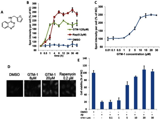 Isolation of a small-molecule inducer of autophagy in neurons.A, The structure of GTM-1. B–D, GTM-1 increases the spot intensity of LC3-GFP+ puncta. SH-SY5Y/LC3-GFP cells were treated with 20 µM GTM-1 for the indicated times (B) or with the indicated concentrations (C) for 24 hrs. The spot intensity of LC3-GFP+ puncta in SH-SY5Y/LC3-GFP cells treated with control vehicle at first time point (0 hr) was used as the negative control (NC). The image data were expressed as % of NC. For each treatment condition, 1000 cells were analyzed. The cells were imaged using a fluorescence microscope (D). E, SH-SY5Y cells were incubated with the indicated compounds for 24 hrs. The cell viability was assayed using the MTT assay. Aβ, Aβ42 (30 µM). Cells treated with vehicle (0.1% DMSO) were used as a negative control (NC).