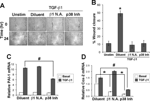 Functional disruption of β1 integrin attenuates TGF-β–mediated motility in normal NMuMG cells. (A) Confluent NMuMG cell monolayers were wounded and allowed to heal for 24 h in the absence (unstim) or presence of TGF-β1 (5 ng/ml), neutralizing β1 integrin antibodies (β1 N.A.; 5 μg/ml), or the p38 MAPK inhibitor SB203580 (p38 Inh; 10 μM) as indicated. Representative photomicrographs from a single experiment performed three times in triplicate. (B) Quantification of wounded NMuMG cultures at 24 h was conducted using ImageJ (v1.34S; National Institutes of Health, Bethesda, MD). Data are mean (±SE) percentage wound closure of three independent experiments completed in triplicate. (C, D) NMuMG cells were stimulated for 24 h with TGF-β1 (5 ng/ml) in the absence (diluent) or presence of either neutralizing β1 integrin antibodies (β1 N.A.; 5 μg/ml) or p38 MAPK inhibitor SB203580 (p38 Inh; 10 μM) as indicated. Afterward, total RNA was isolated to monitor changes in the expression of PAI-1 (C) or Cox-2 (D) by semiquantitative real-time PCR. Data are mean (±SE) of three independent experiments completed in triplicate. In B–D, *,#p < 0.05.