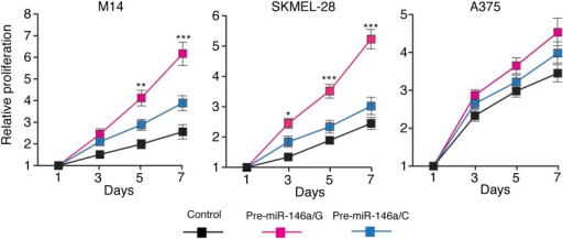 pre-miR-146a/G promotes proliferation of melanoma cells more effective than pre-miR-146a/C.M14, SKMEL-28 and A375 cells stably expressing pre-miR-146a/C (blue) or pre-miR-146a/G (red) or an empty vector (black) were analyzed for proliferation at indicated days. Relative proliferation is plotted. *, ** and *** represents p values <0.01, <0.001 and <0.0001 respectively.DOI:http://dx.doi.org/10.7554/eLife.01460.016