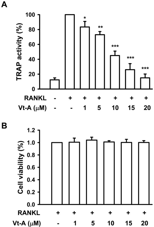 Effects of (+)-vitisin A (Vt-A) on RANKL-induced tartrate-resistance acid phosphatase (TRAP) activity and cell viability in RAW264.7 cells.(A) For osteoclast differentiation, RAW264.7 cells were stimulated with RANKL (100 ng/ml) and TRAP activity was assayed in cell lysates as described in methods. (B) The effect of Vt-A on cell viability was evaluated by MTT assay. Each value is the mean ±SEM of five independent experiments each performed in triplicate. *p<0.05 and **p<0.01, different from values after treatment with RANKL alone.
