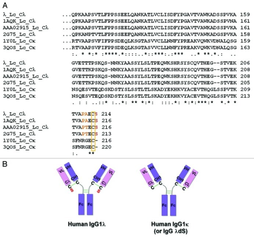 Differences Between Representative Human IgG1λ And IgG1κ Light Chain  Constant Regions. (