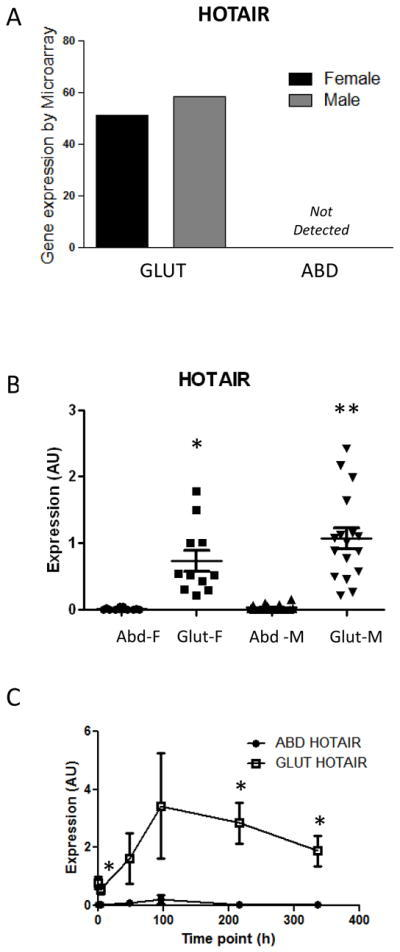 Expression of HOTAIR exclusively in human gluteal sc adipose tissueMicroarray analysis identified HOTAIR as a gene expressed only in gluteal depot (A). HOTAIR expression by qPCR in WAT paired samples (n=35 subjects, paired t-test compared with Abd of same sex *p<0.001 **p<0.0001) (B) and in vitro during differentiation of paired abdominal (ABD) and gluteal (GLUT) human primary preadipocytes (n= 4 independent experiments, paired t-test compared with Abd of same time point *p<0.05) (C).F=female; M=male
